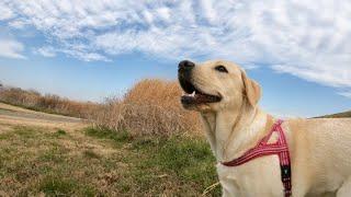 うこ吉さん、ハーネス情報ありがとうございました! 他犬がいないと庭と...