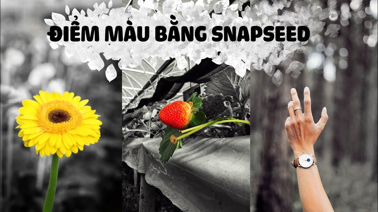 Chỉnh ảnh điểm màu color pop bằng Snapseed + Quà Tặng