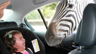 Forget CATS and DOGS! Hilarious KIDS vs ZOO ANIMALS are SO FUNNIER! - You