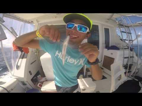 2016 SIBT Grenada Billfish Tournament Team Reel Deal