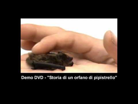 """La storia del pipistrello """"Divo"""" - Il trailer del DVD parlato"""
