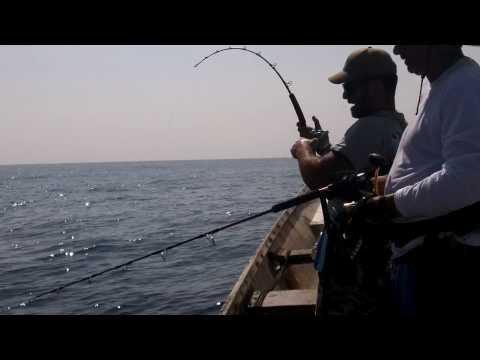 Triple strike, live strikes fishing in socotra by jigging