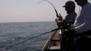 Triple strike, live strikes fishing in socotra by jigging