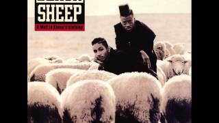 Black Sheep - A Wolf in Sheep