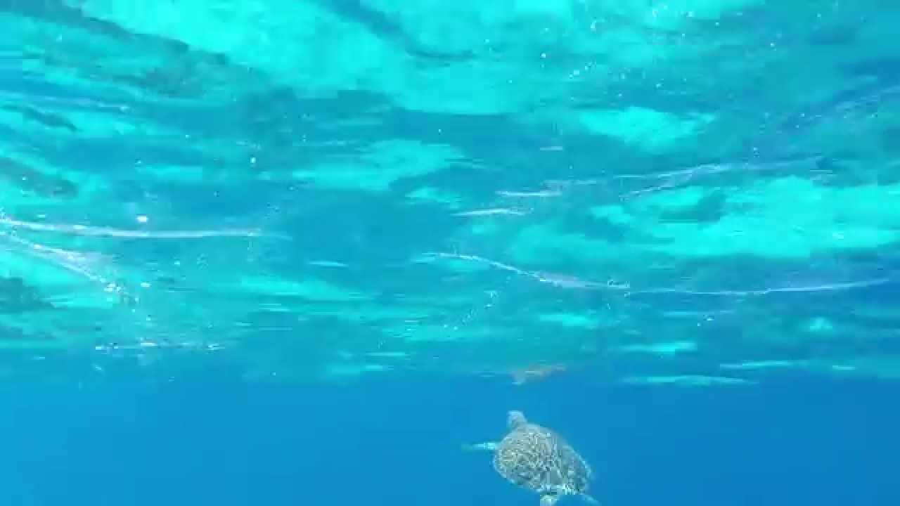 Samsung Gala... Underwater Ocean Images