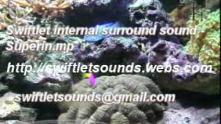 Swiftlet Surround Sound for swiftlet farms - Superin mp3