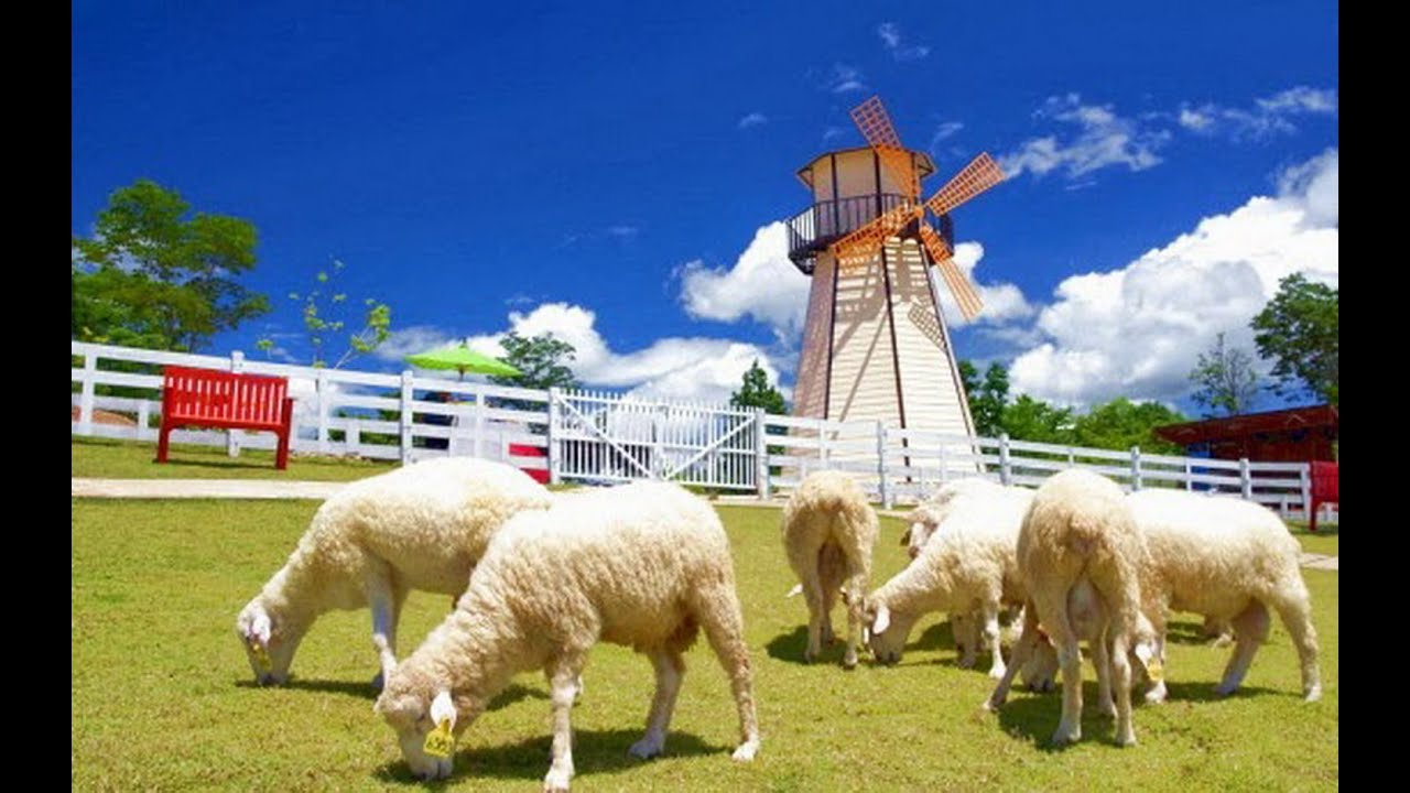 Image result for swiss sheep farm thailand