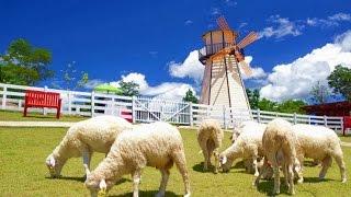 Swiss Sheep Farm แหล่งท่องเที่ยว ชะอำ หัวหิน เพชรบุรี  Cha-Am  Hua-Hin