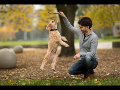 Top 11 Amazing Pets Who Saved Their Owners