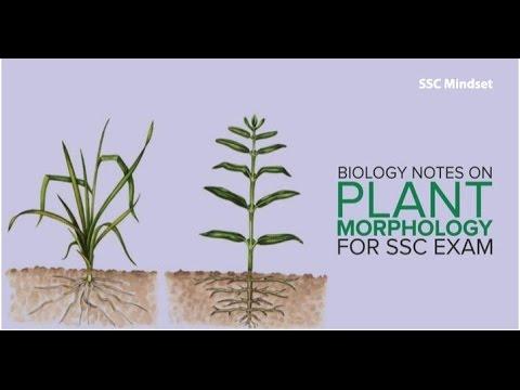 जीवविज्ञान Biology Crash Course (4/13) : Plant Morphology | SSC CGL 2017