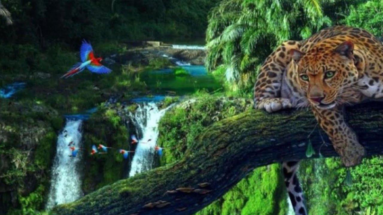 O bioma mais PERIGOSO do Brasil