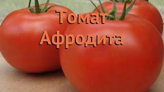 Томат обыкновенный Афродита (afrodita) 🌿 томат Афродита обзор: как сажать семена томата Афродита