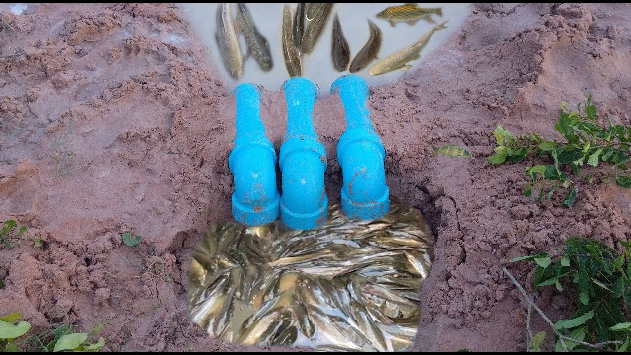Creative Girl Make Fish Trap Using PVC Water Pipe To Catch A Lot Of Fish