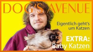 Hunde Lifestyle und Babykatzen! - Dogs Avenue