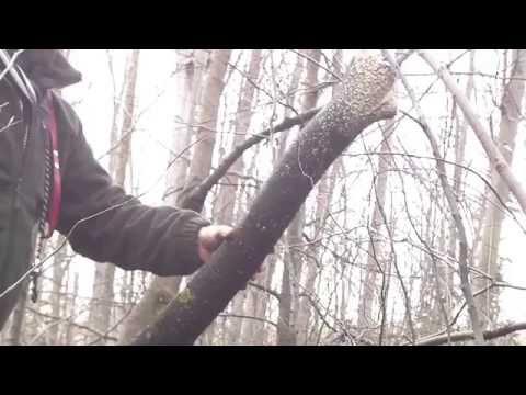 Cum se Forjeaza un Topor - Maestrul Fierar Tibi Moldovan - Topor Forjat Manual from YouTube · Duration:  10 minutes 56 seconds