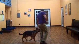 San Antonio Dog Training Co. Boomer