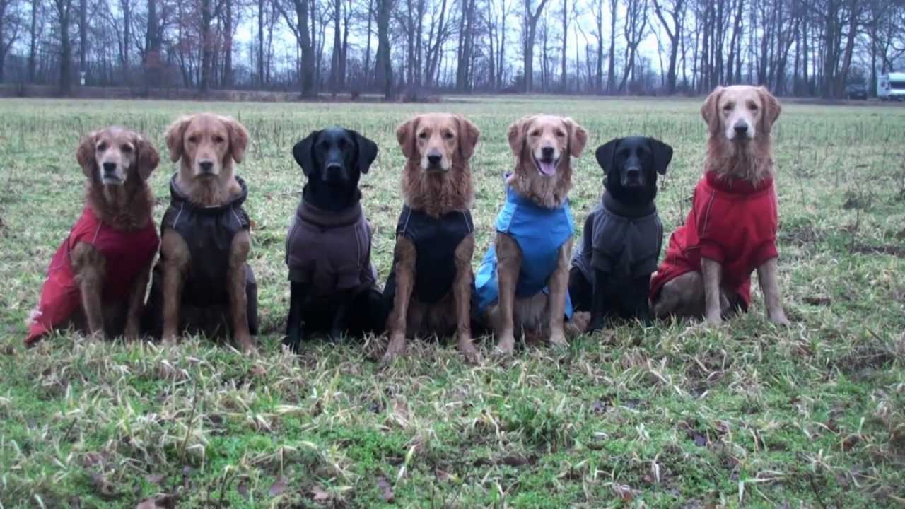Hurtta Hundebekleidung Hundemantel Pro Kollektion | HUND-unterwegs ...