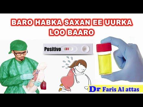 Download BARO HABKA SAXAN EE UURKA LOO BAARO ADIGA OO GURIGAGA JOOGA. Drfaris