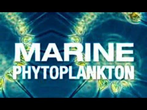 Future of Medicine: Marine phytoplankton a medicinal powerhouse created by Mother Nature