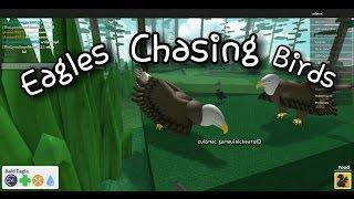 Aigle chassant des oiseaux - simulateur d'oiseau de Roblox