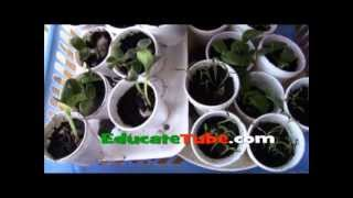 How To Make A Miniature Micro Greenhouse For Vegetable Garden Using Recyclable Plastic Egg Carton
