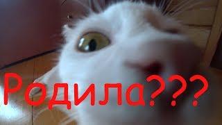 Родились у нас котята...............