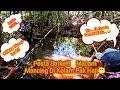 Mancing Ikan Di Kolam Alami Tempat Berkrumun Ikan Kecil  Mp3 - Mp4 Download