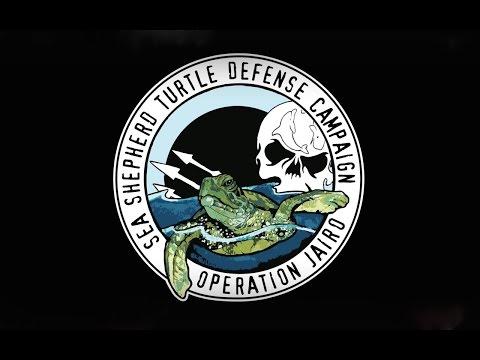 Operation Jairo, Florida: Illuminating the Problem - Sea Shepherd Los Angeles MEDIA