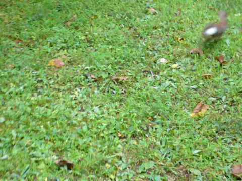 2008-08-11: USA New Jersey Livingston Wild Rabbit