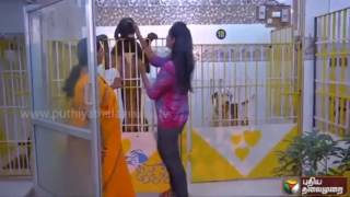 Hostel for dogs keelkatalai chennai  the best dog boarding place in chennai