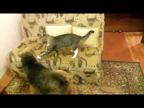 Коты против собак.