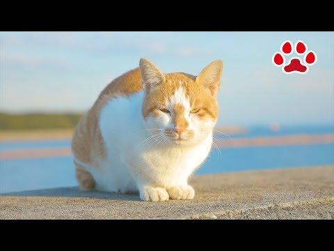 2018 10 30 野良猫【瀬戸の野良猫日記】today stray cat and kitten