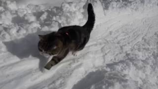 雪とねこ2。-Snow and Maru 2.-
