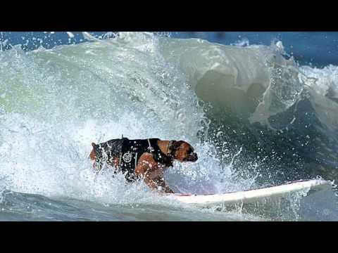 Hanzo 'Samurai Surf Dog'