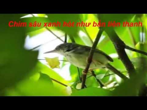 Tiếng Chim Mồi - Chim Sâu Xanh Hót Như Bắn Liên Thanh \