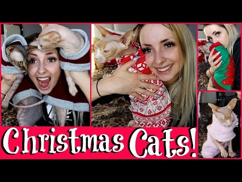 Hairless Cat CHRISTMAS Outfits Haul & TRY ON.