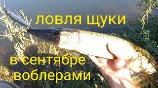 щуки любят этот воблер Рыбалка на щуку в сентябре Ловля щуки на спиннинг