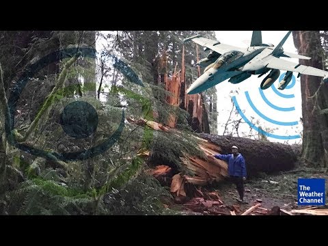 Twisted Tree Mystery & Electromagnetic Warfare in Olympic National Forest
