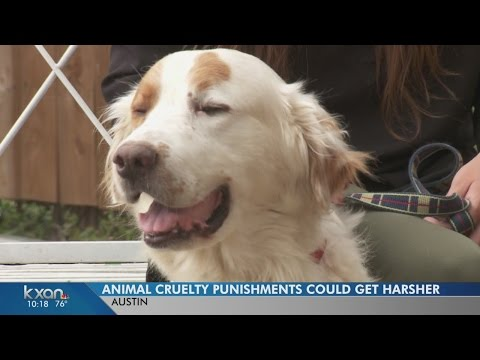 Animal cruelty punishments in Texas could get harsher if law passes