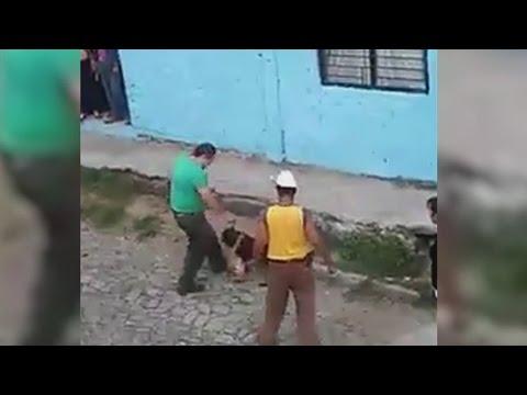 Lanzan a un perro indefenso a las garras de una fiera