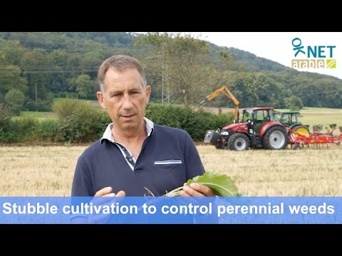 Stubble cultivation to control perennial weeds in organic agriculture (Nov 2016)