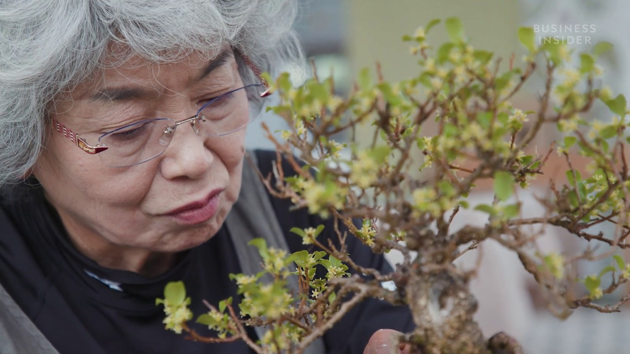 Why Bonsai Trees Are So Expensive Youtube