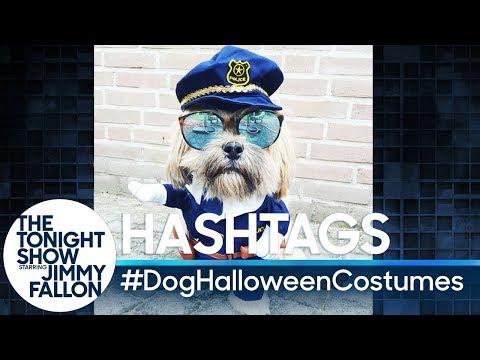 Hashtags: #DogHalloweenCostumes