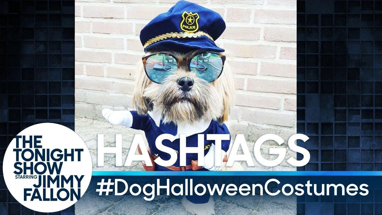 Hashtags Doghalloweencostumes Doovi