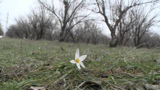 Природные катаклизмы на юге Казахстана (видео)(, 2015-02-09T08:19:12.000Z)