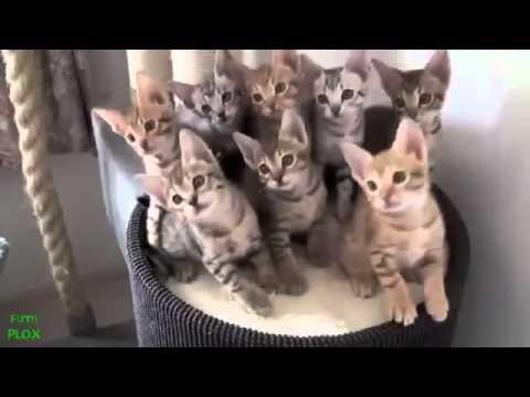 Gokil Video Lucu Hewan Vidio Lucu Aksi Kucing Dan