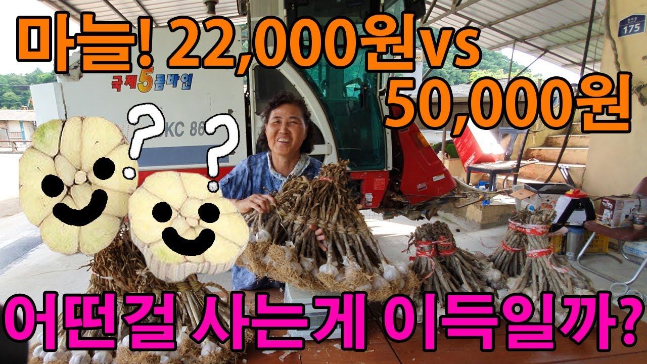 22,000원vs50,000원짜리 마늘 어떤걸 사는게 이득일까? 마늘가격 알아보기