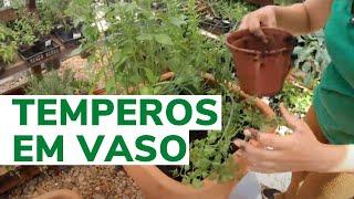 Monte uma Pequena Horta em Vasos com seus Temperos