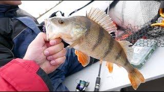 Осенняя  Рыбалка на реке. Взяли крупного Окуня.
