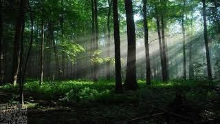 3210 Dark forest radiOzora KRAFT Insomnia Records Series 11 15050218